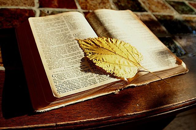 多くのアニメに影響を与える聖書の上に葉が乗っている