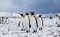 [クルーズ旅行,船旅]クルーズ旅行,南極