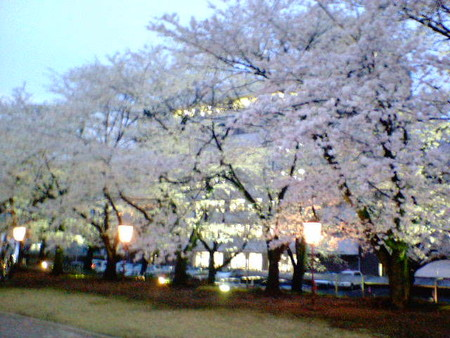 文化会館桜