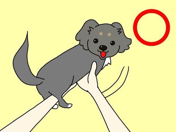 小型犬の正しい抱っこのしかた