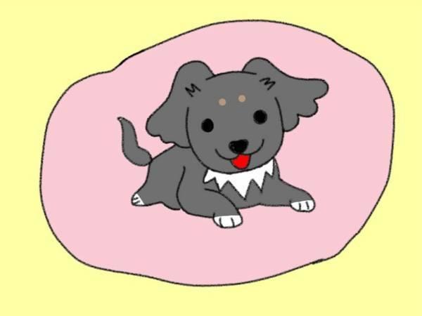 犬が背中をピタッとくっつけてくるのはどうして 飼い主への信頼の証