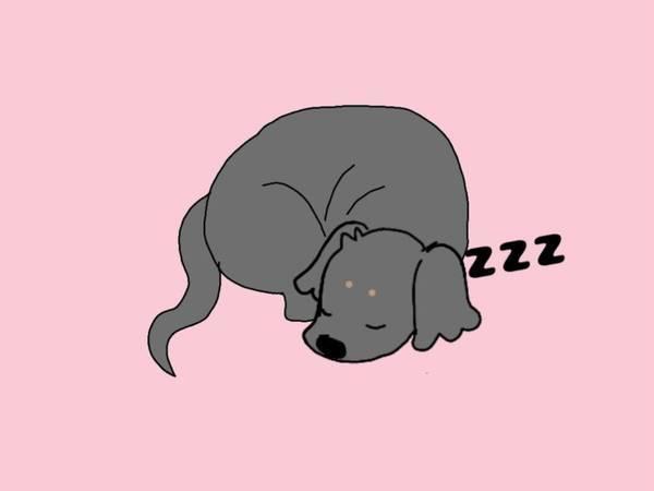丸くなって眠る犬のイラスト