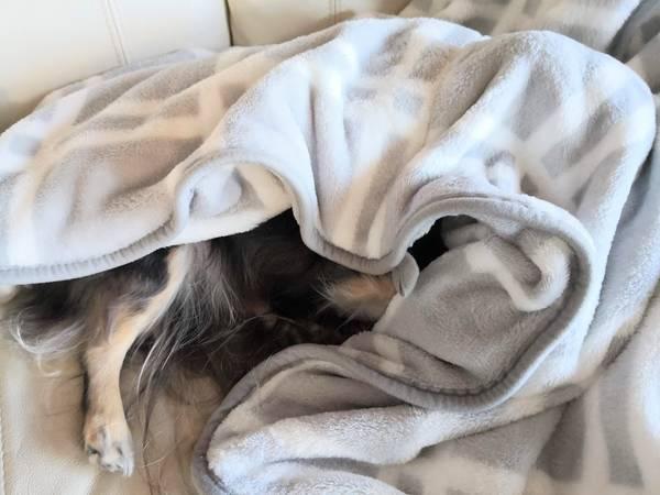 着る毛布の中にいたのは