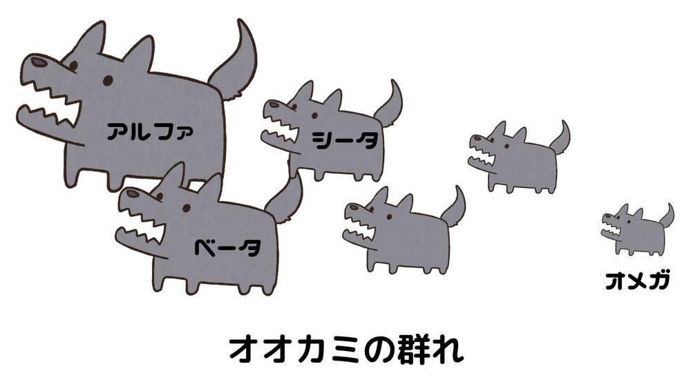 オオカミの群れの順位