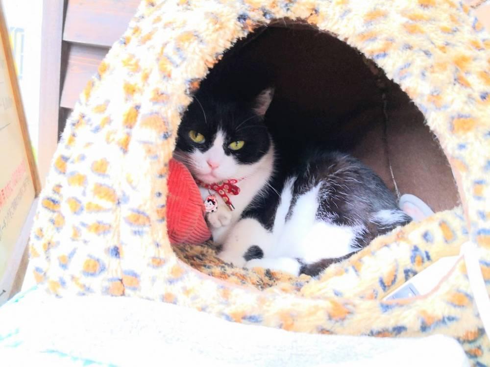 天ぷらレストラン楽々亭のネコ