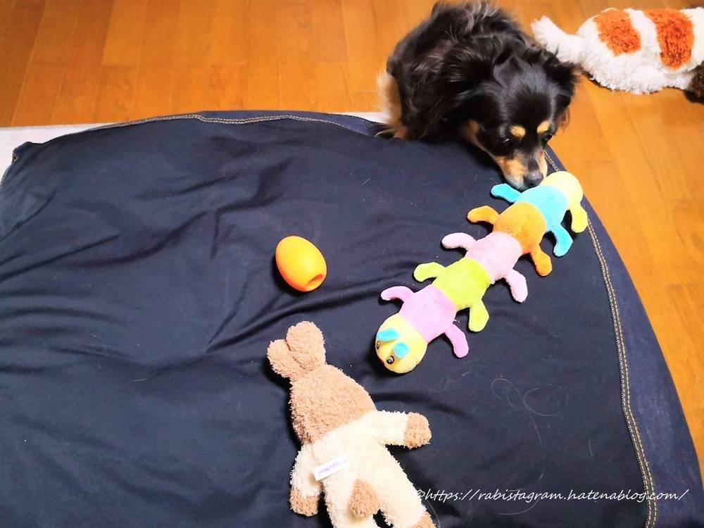 おもちゃを並べるチワックス
