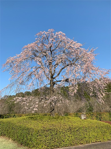 f:id:happyunagi-yuko:20200322205013j:image