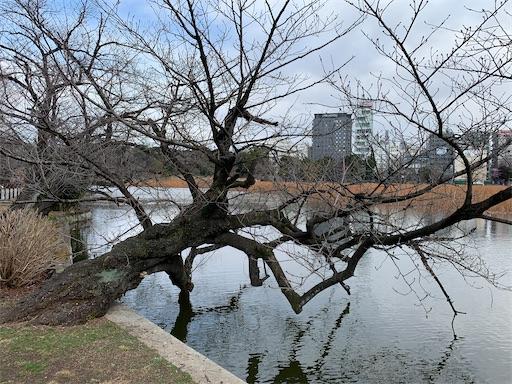 f:id:happyunagi-yuko:20210130112916j:image