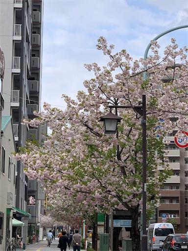f:id:happyunagi-yuko:20210402183850j:image