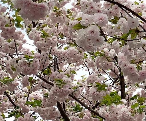 f:id:happyunagi-yuko:20210402184836j:image