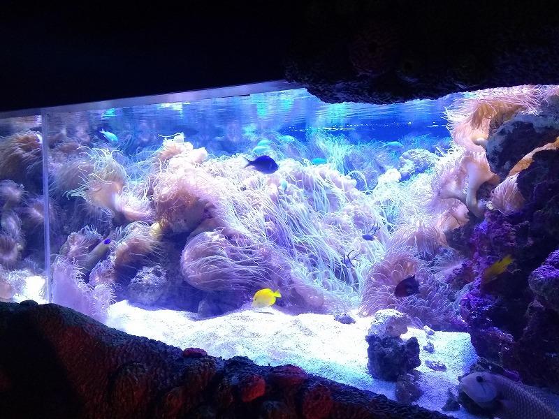 シドニーのシーライフ水族館