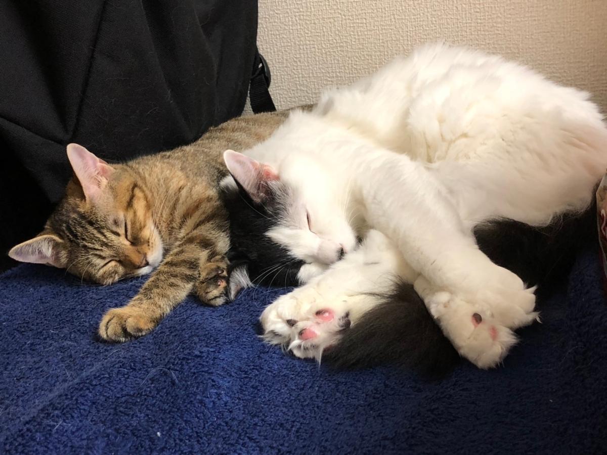 猫2匹がタオルの上で寝ている