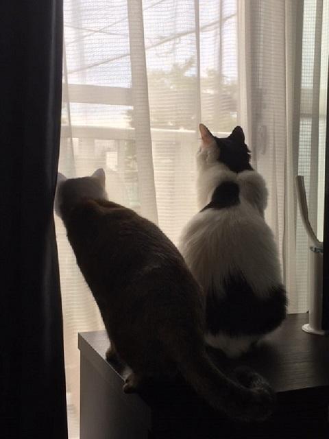 外を見ている2匹の猫