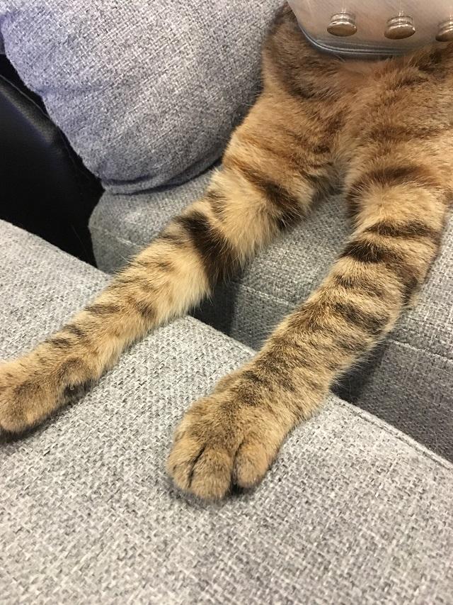 腕を伸ばして眠る猫