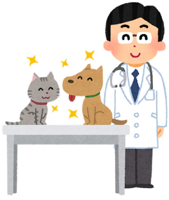 獣医師と猫と犬の画像
