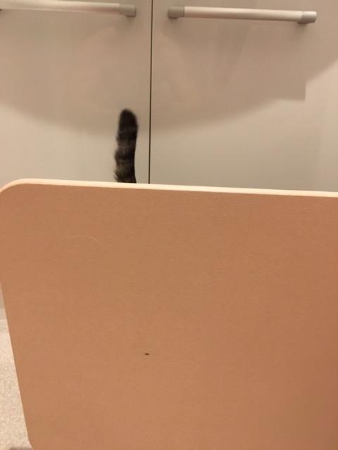 珪藻土の後ろから見える猫のしっぽ