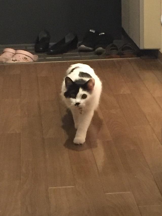近寄ってくる猫