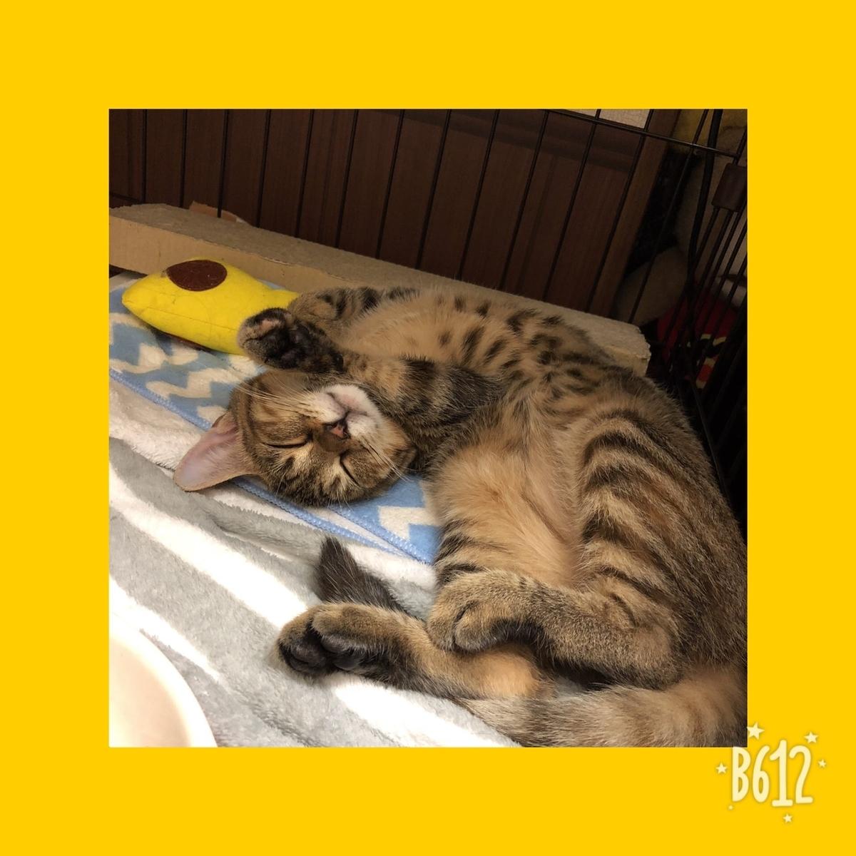 横になって寝ている猫