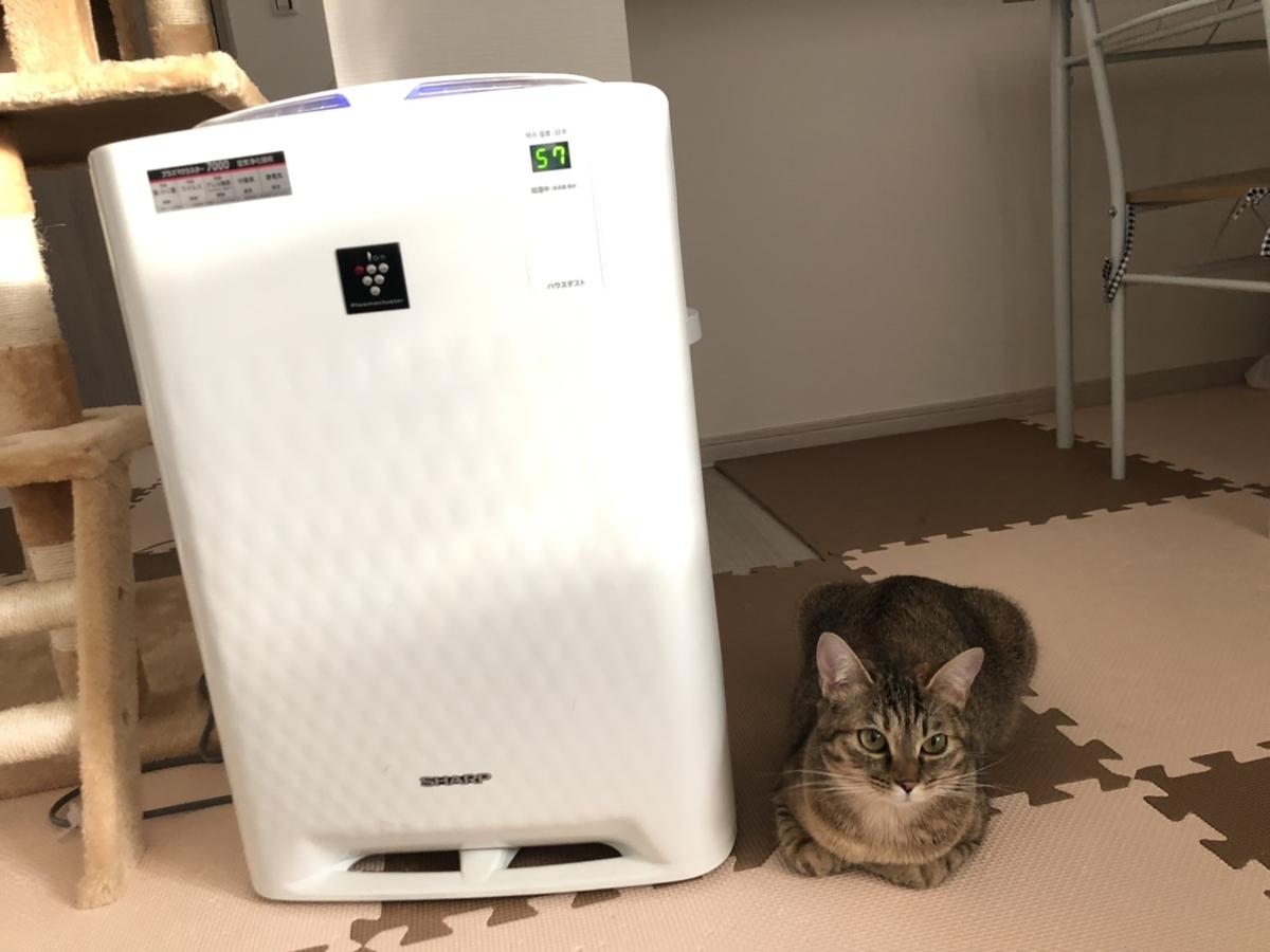 空気清浄機の隣にいる猫