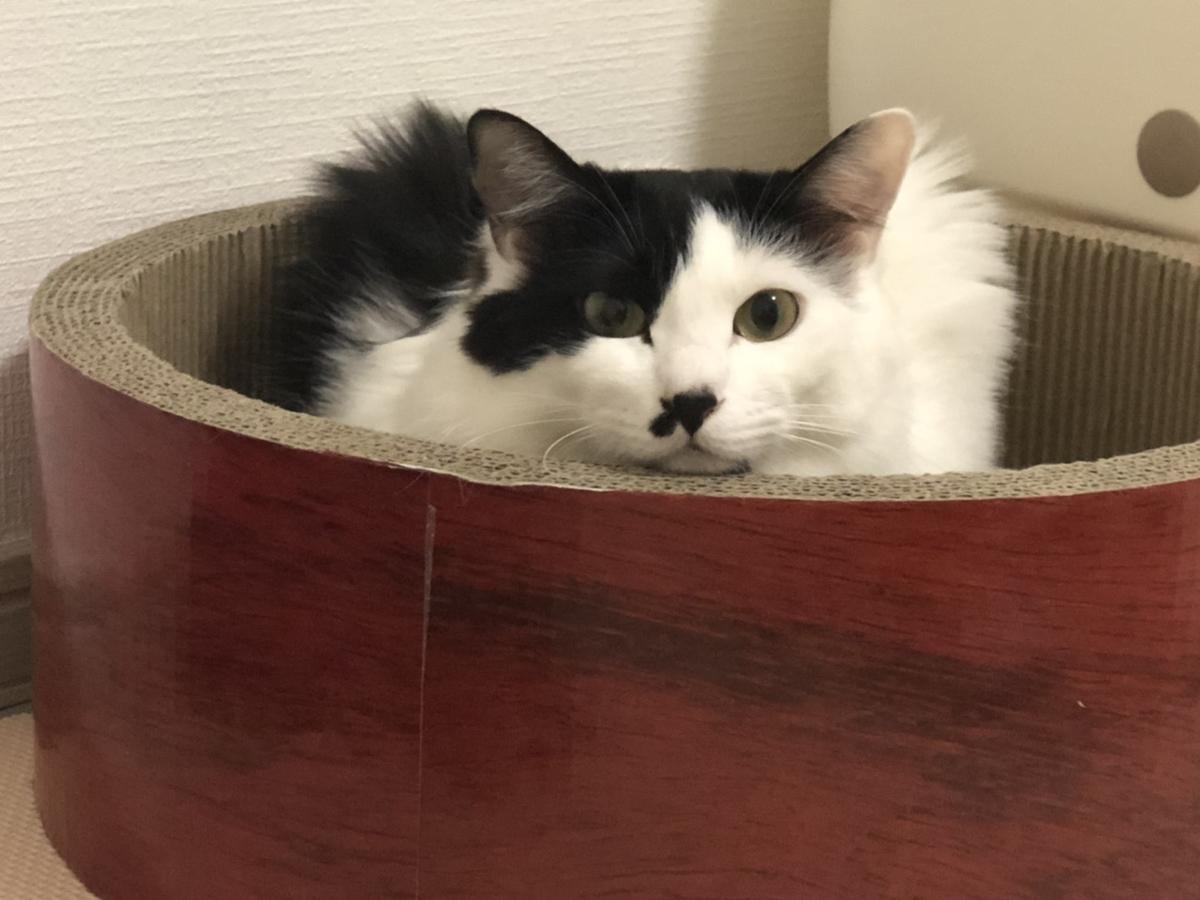 こちらを見ている猫