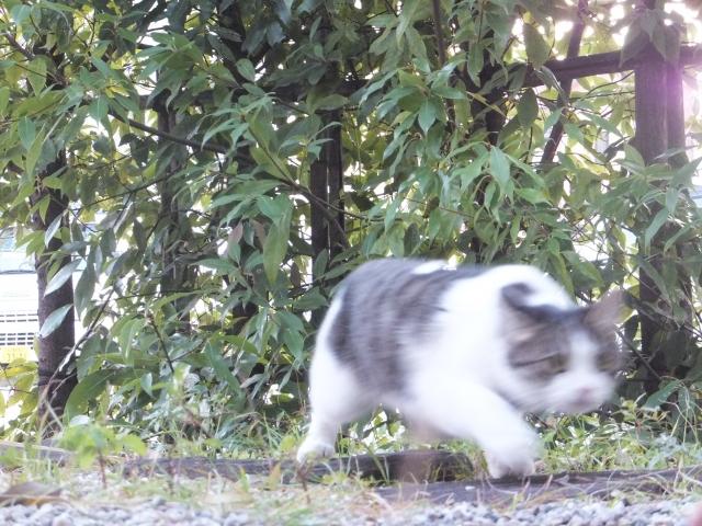 ブレブレの猫