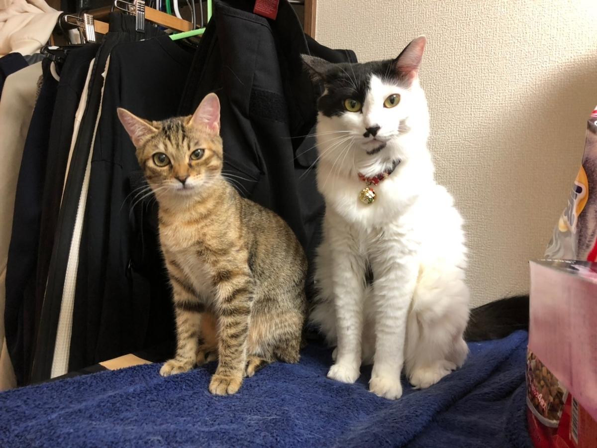 座っている猫2匹