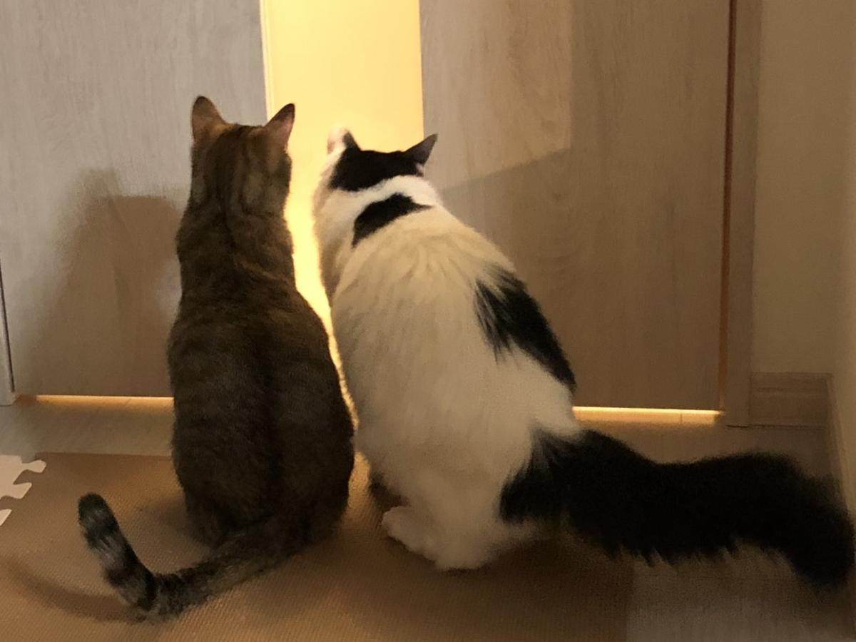 2匹の猫が並ぶ