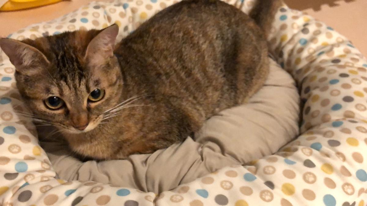 ベッドに座る猫