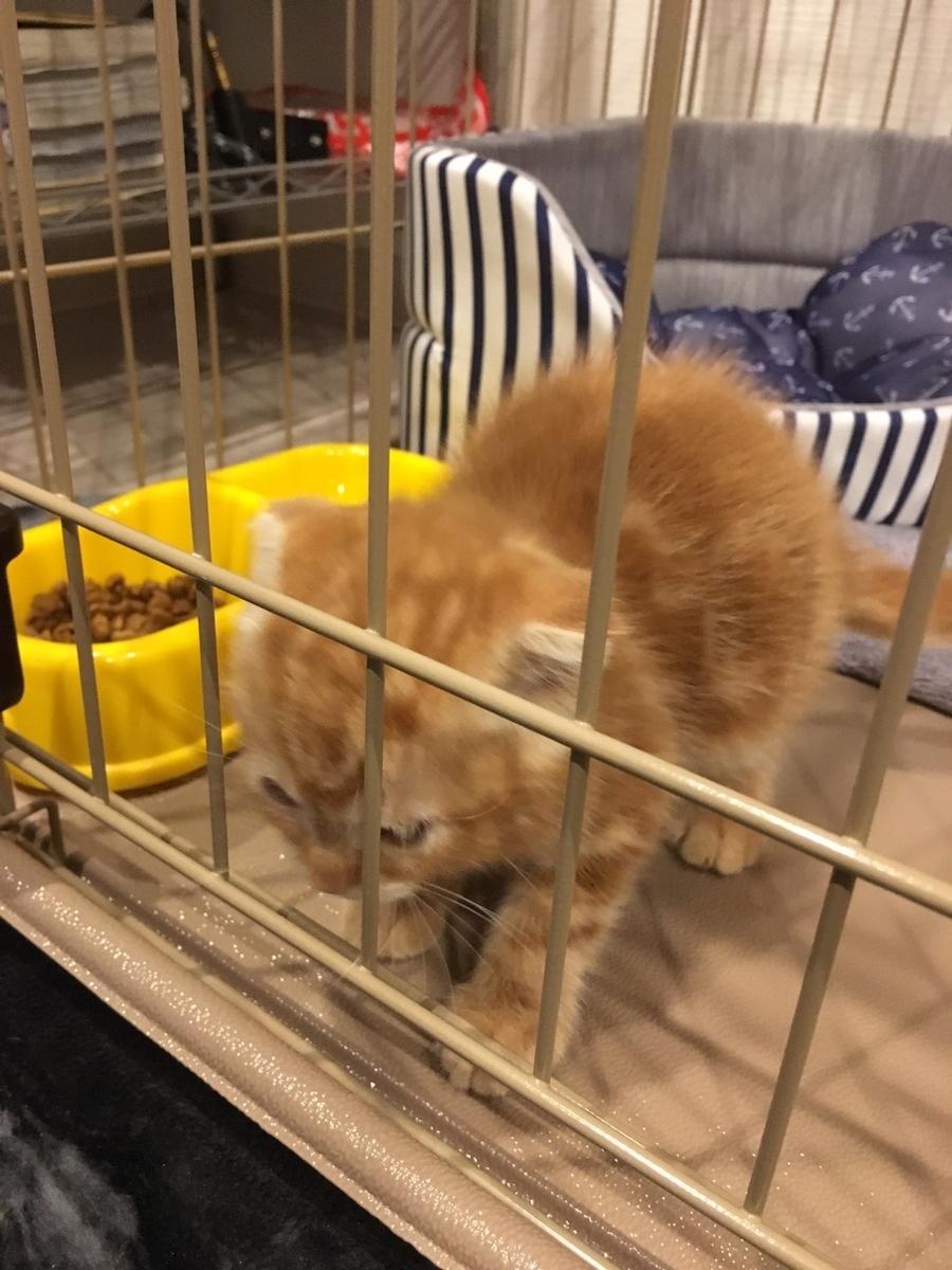 柵に追突する猫