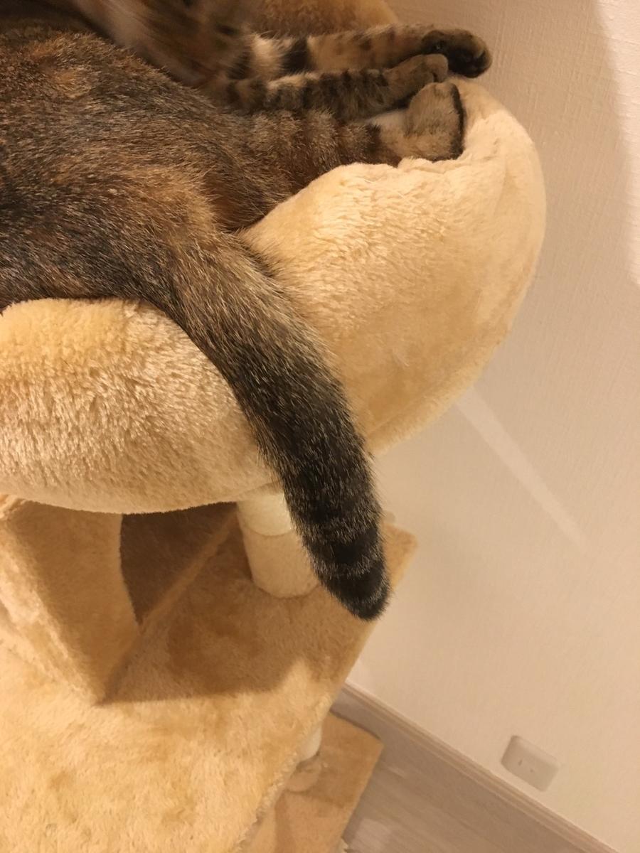 キジトラ猫のしっぽ