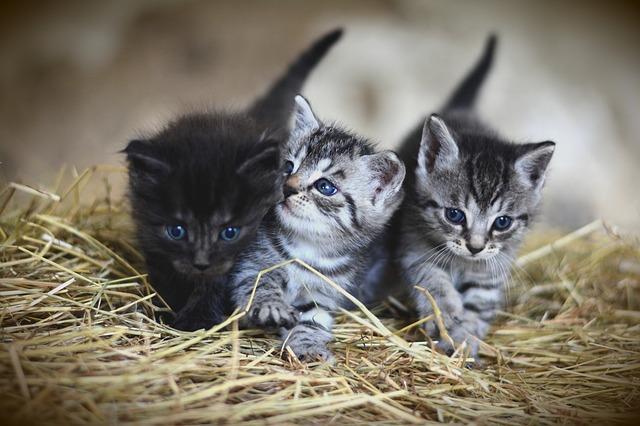 猫2匹が並んでいる