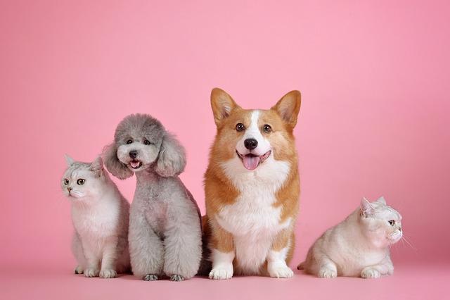 犬2匹と猫2匹が並んでいる