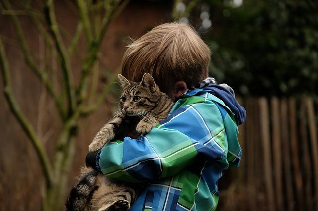 猫を抱っこする男の子