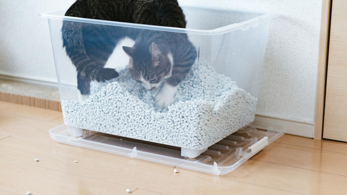 トイレで暴れる猫