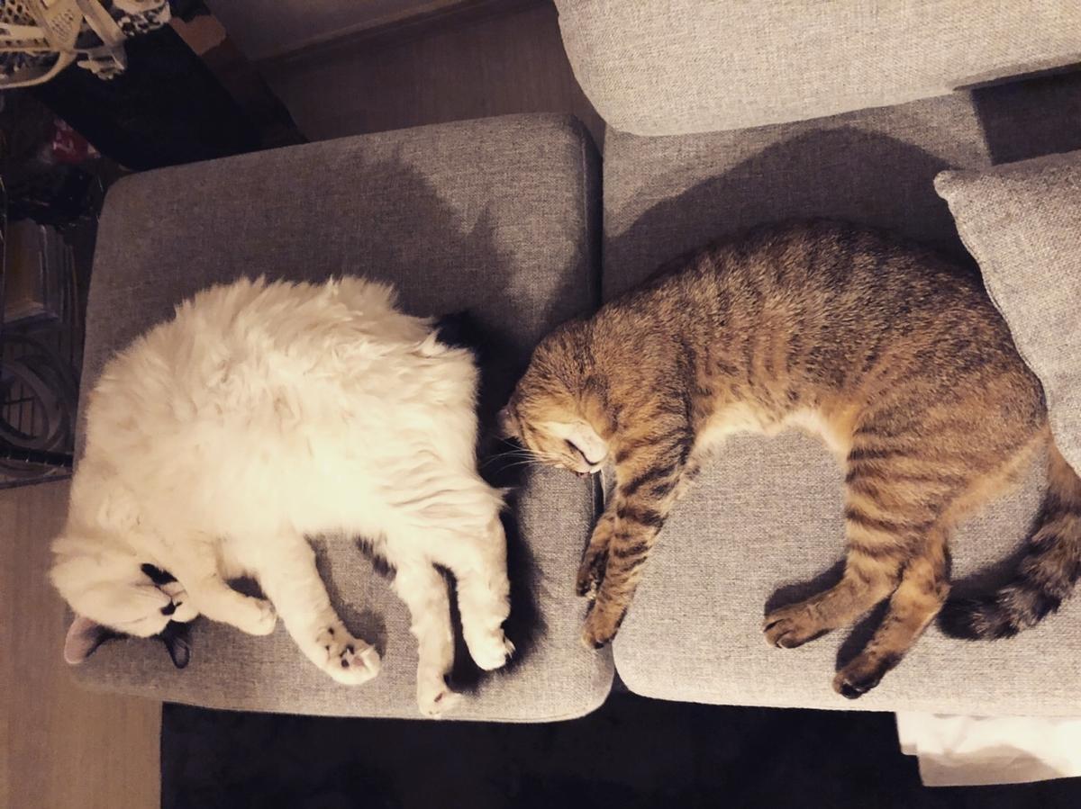 2匹の猫が寝ている