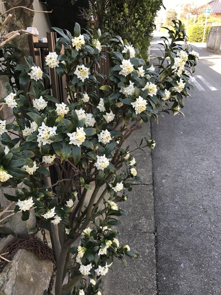 f:id:haradamasaru:20170322095217j:plain