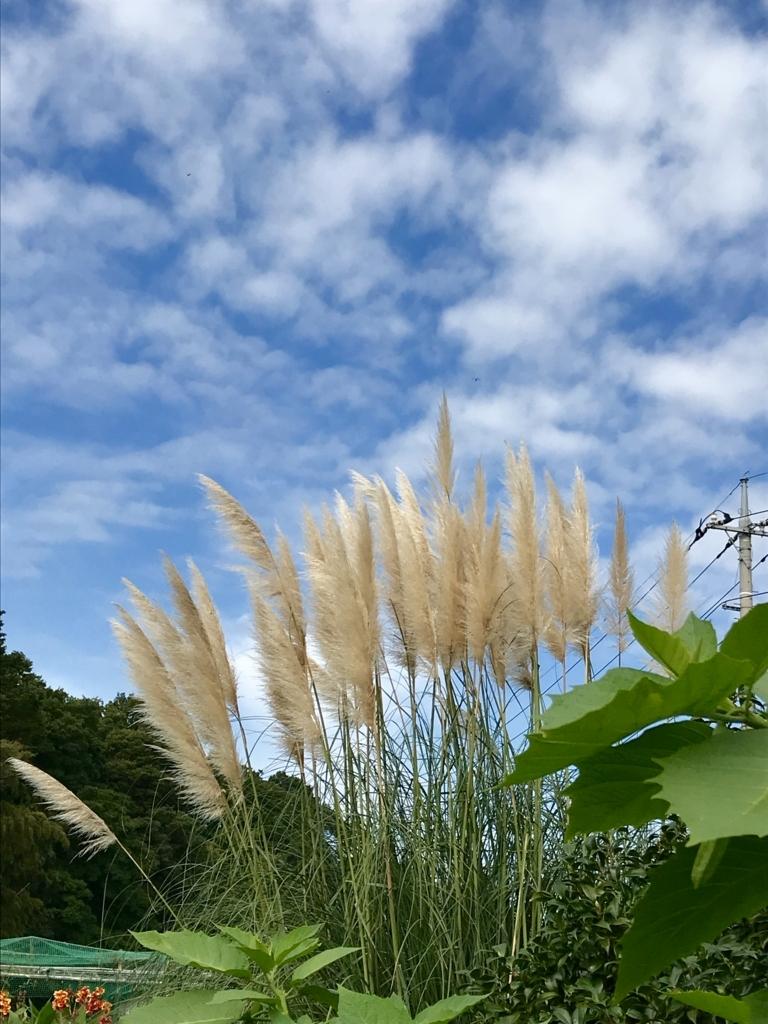 f:id:haradamasaru:20171008160843j:plain