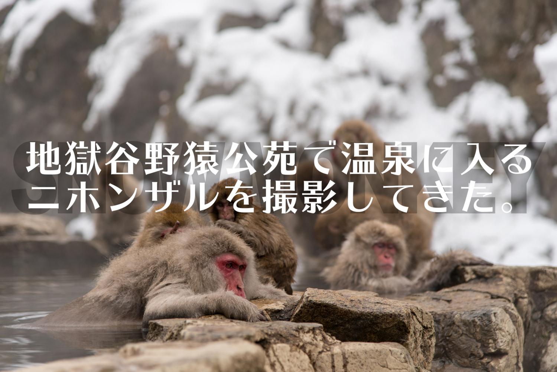 f:id:haradesugi:20180101223928j:plain