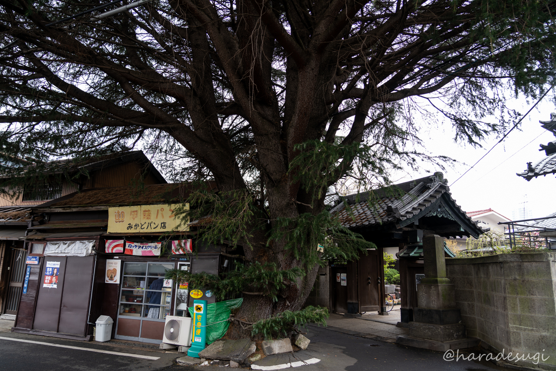 f:id:haradesugi:20190331185644j:plain