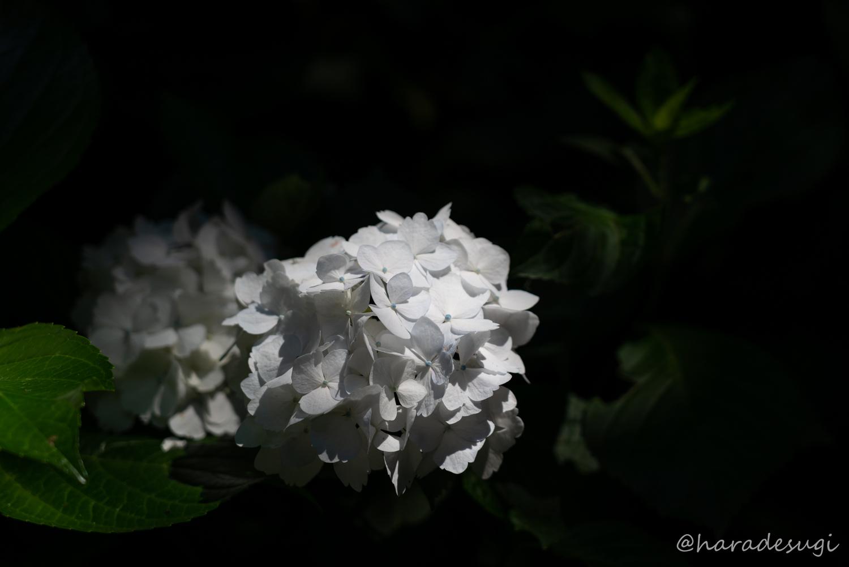 f:id:haradesugi:20190616154140j:plain