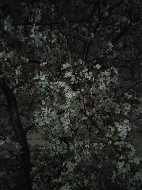 f:id:haragaku:20210403102842j:image