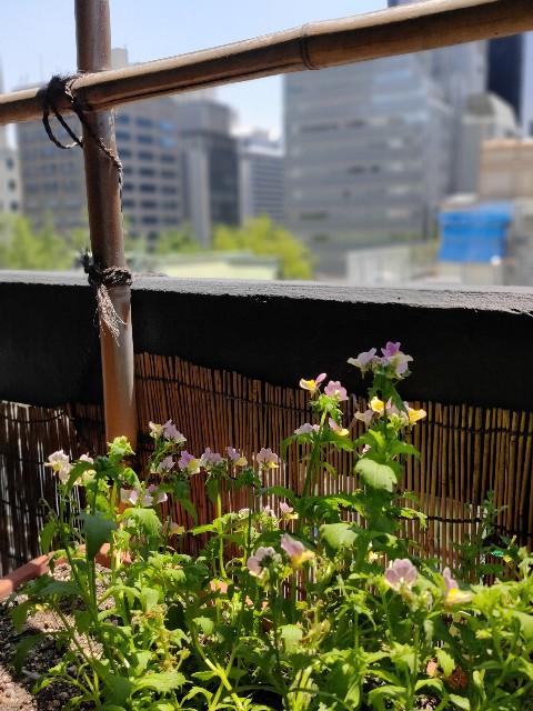 f:id:haragaku:20210601194637j:image