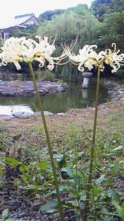 f:id:haramidori:20120924122600j:image:left