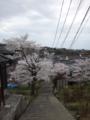 [季節] 桜坂