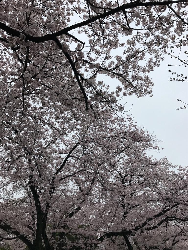 f:id:harenohisan:20170408183935j:image