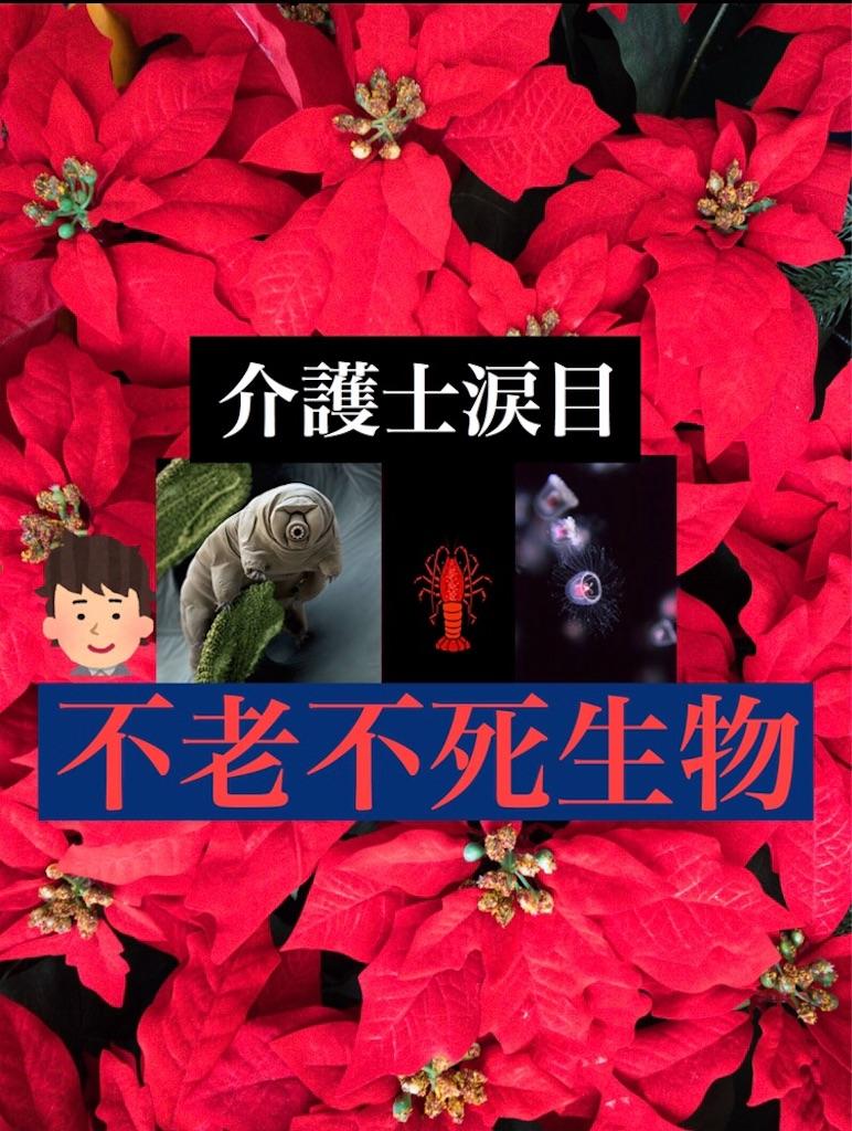 f:id:hareoku:20200715195852j:image