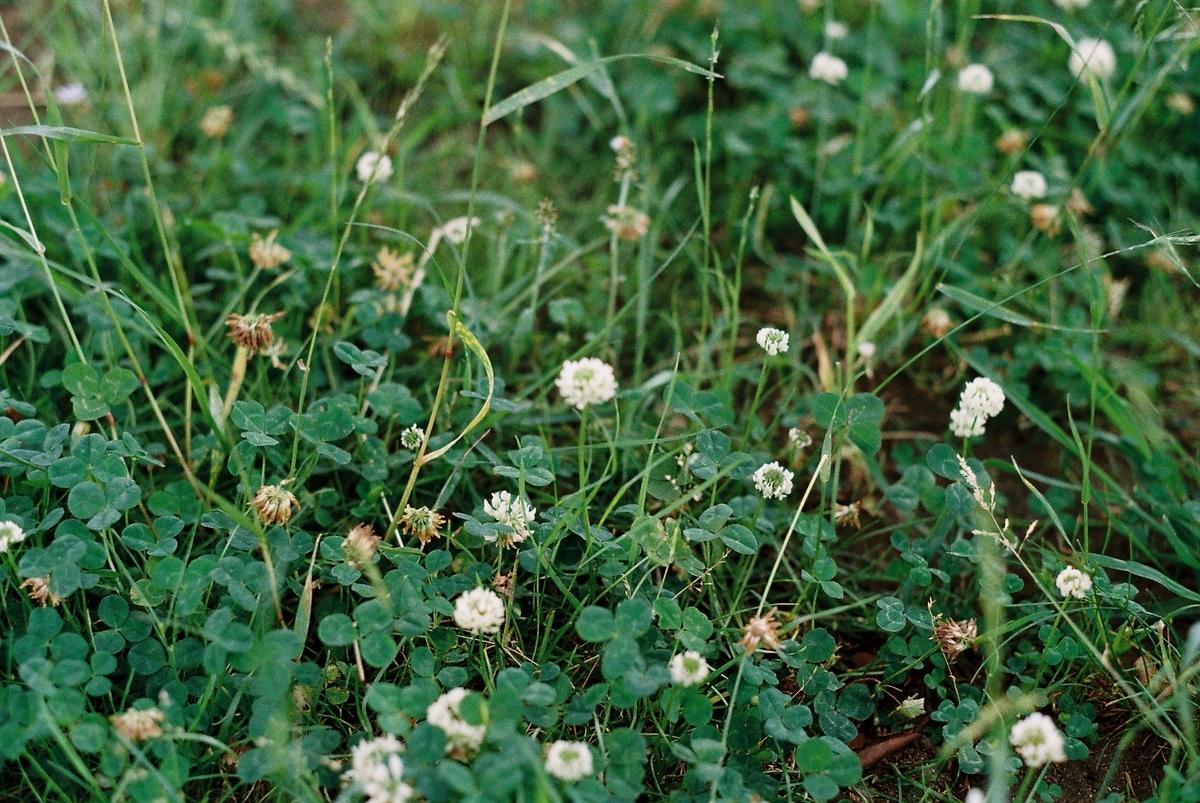 野に咲く花:フィルムカメラ