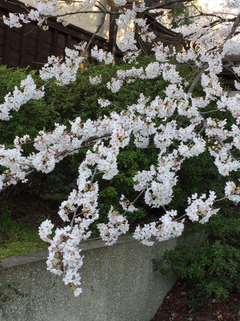 f:id:harinezumi-no-hachiko:20180326203007j:plain