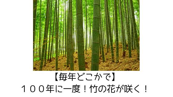 f:id:harinezumi-no-hachiko:20190422100115p:plain
