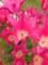 チューリップ乱れ咲き!